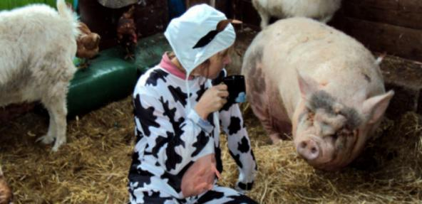 Fiona Oakes in the cow suit ahead of her latest challenge