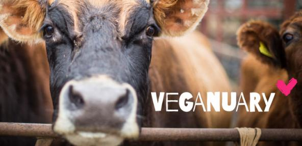 97% of those trying veganism in January inspired by someone else
