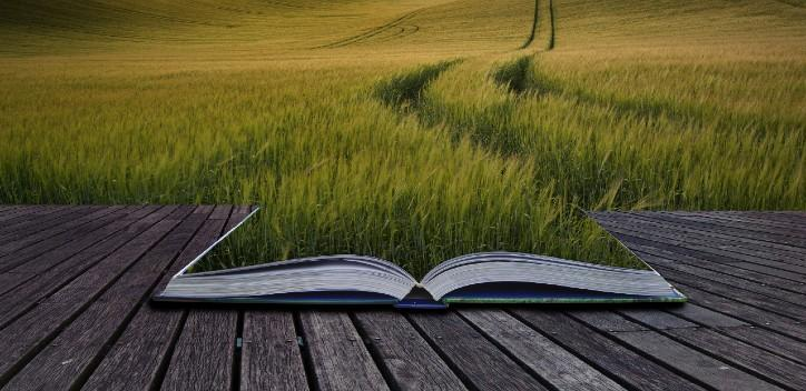 Field landscape and an open book with grass
