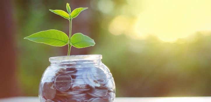 sapling growing from a money jar