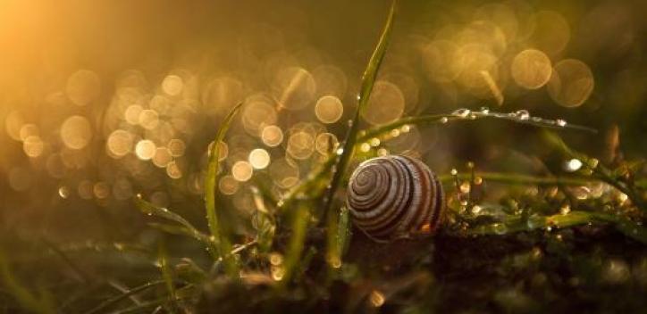 snail; dew; morning