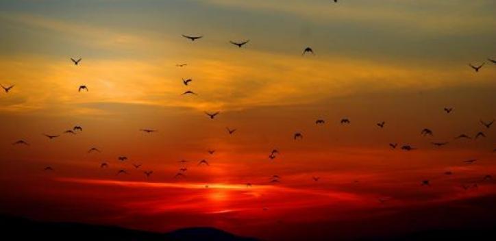 sunset; birds