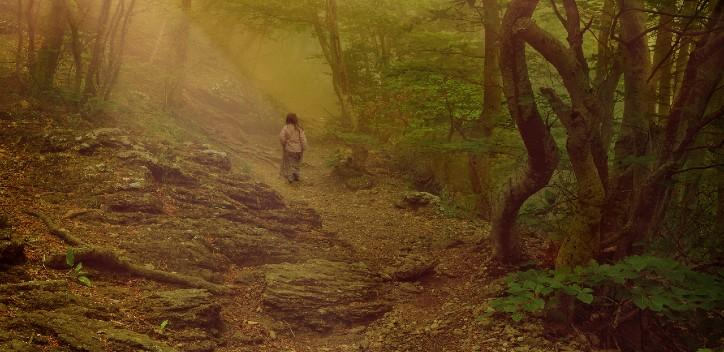 person walking in a misty forest