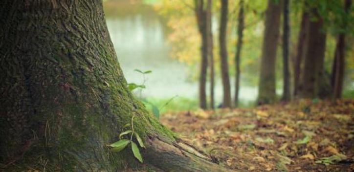 tree; nature