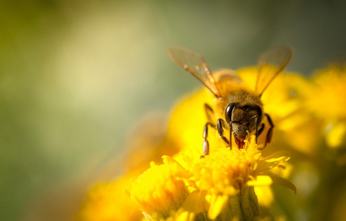 The honey industry | The Vegan Society - photo#22