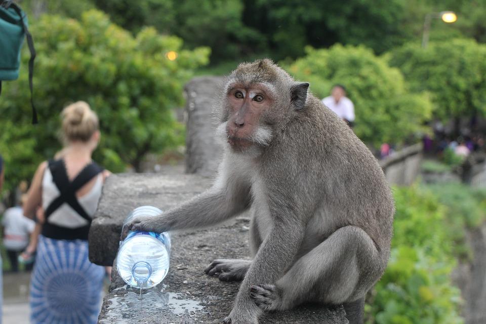 Monkey with water bottle